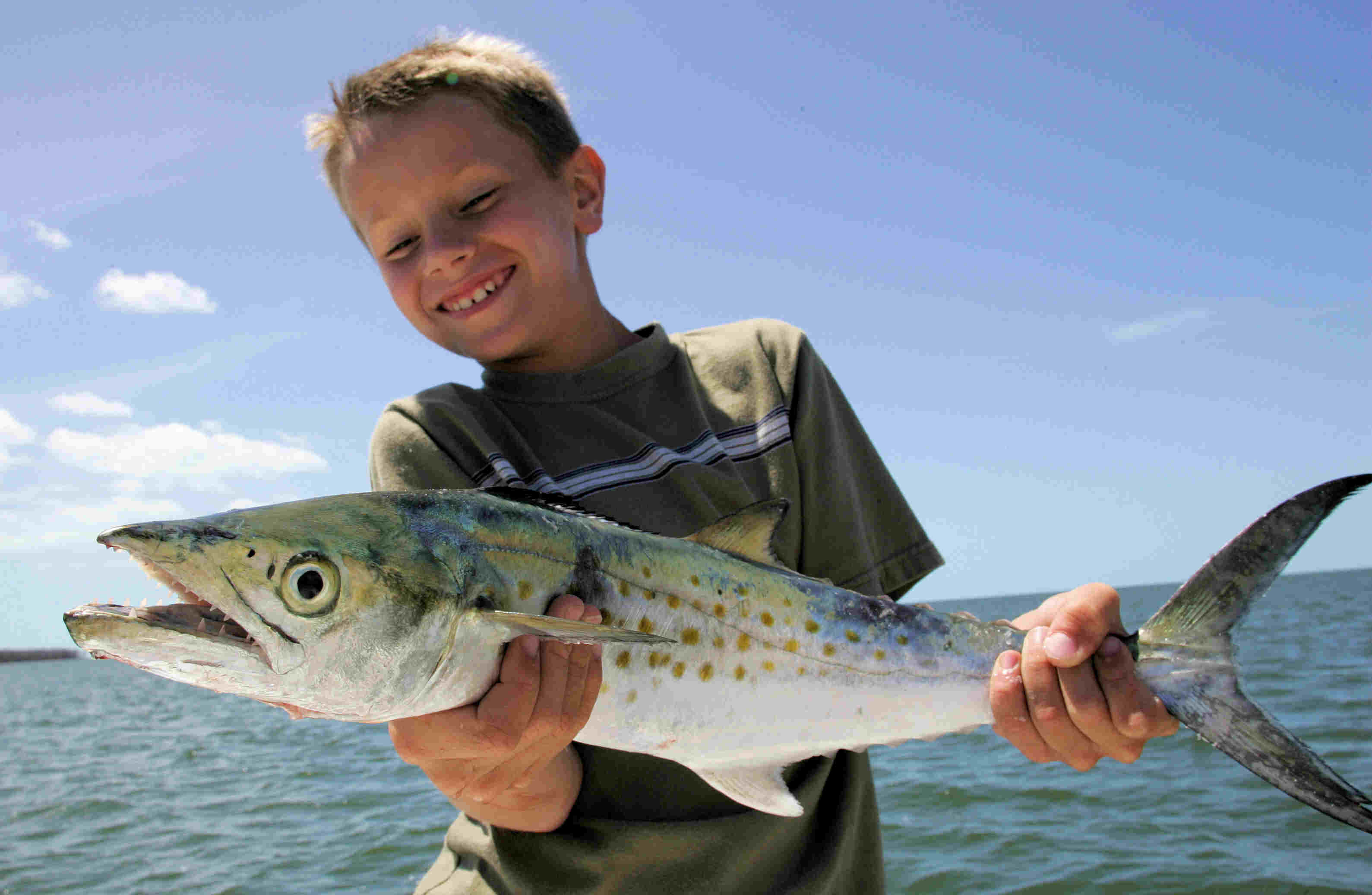 Spanish mackerel reel surprise for Spanish mackerel fish